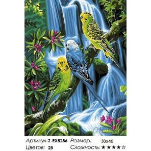 Волнистые попугаи Раскраска картина по номерам на холсте Z-EX5286