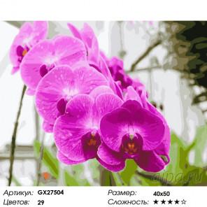Количество цветов и сложность Красивая орхидея Раскраска картина по номерам на холсте GX27504