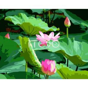 Цветок лотоса Раскраска по номерам акриловыми красками на холсте Iteso Картина по номерам