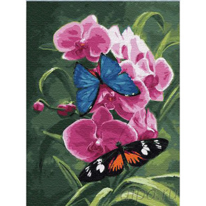 Бабочки и орхидея Раскраска картина по номерам на холсте Z-EX6048