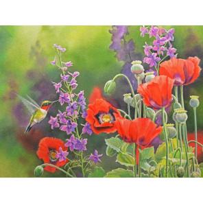 Колибри Раскраска картина по номерам на холсте