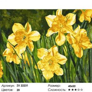 Количество цветов и сложность Желтые нарциссы Раскраска картина по номерам на холсте ZX 22231