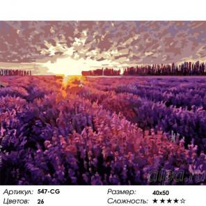 Вечер в Провансе Раскраска картина по номерам на холсте Белоснежка 547-CG