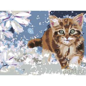 3 Котенок Раскраска по номерам на холсте Живопись по номерам