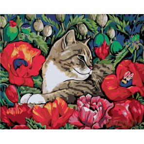 Раскладка Отдых в маках Раскраска картина по номерам на холсте A121