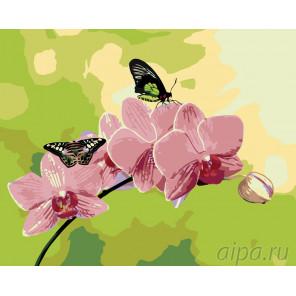 Розовые орхидеи Раскраска по номерам на холсте Живопись по номерам ARTH-AH243