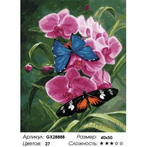 Количество цветов и сложность Орхидея и бабочки Раскраска картина по номерам на холсте GX28888