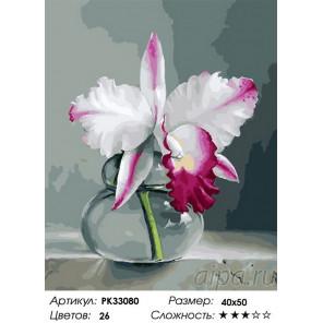 Сложность и количество цветов Орхидея на сером фоне Раскраска картина по номерам на холсте PK33080