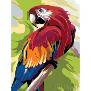 Схема Говорящий попугай Раскраска по номерам на холсте Живопись по номерам A353