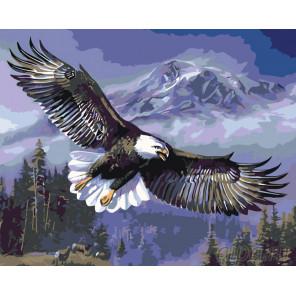 Раскладка Парящий орлан Раскраска картина по номерам на холсте KTMK-60370