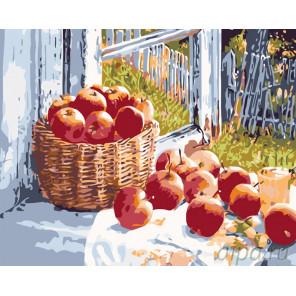 Раскладка Летние яблоки Раскраска картина по номерам на холсте KTMK-77993