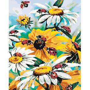 схема Садовые ромашки Раскраска по номерам на холсте Живопись по номерам KTMK-006955