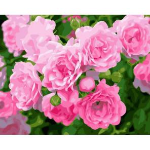 Кустовая роза Раскраска по номерам на холсте Z-GX28850