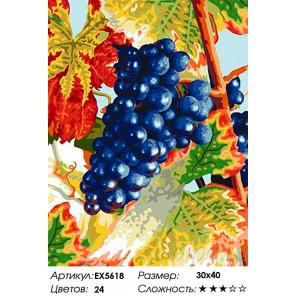 Виноград Раскраска картина по номерам на холсте EX5618