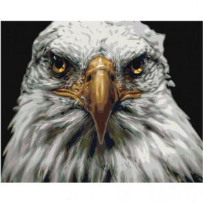 Голова орла 80х100 Раскраска картина по номерам на холсте