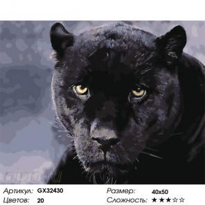 Взгляд черной пантеры Раскраска картина по номерам на холсте GX32430