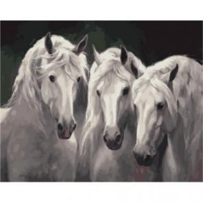 Белые мустанги Раскраска картина по номерам на холсте