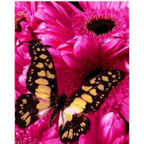 Бабочка и астры Раскраска картина по номерам на холсте