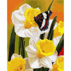 Нарциссы и бабочка Раскраска картина по номерам на холсте