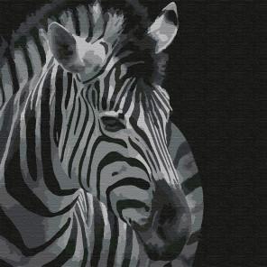 Зебра Раскраска картина по номерам на холсте KHM0053