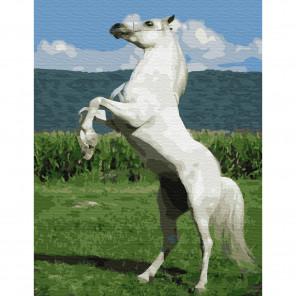 Белый конь Картина по номерам с цветной схемой на холсте KK0616