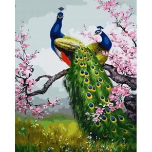 Павлины Раскраска картина по номерам на холсте GX33784