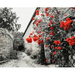 Красные розы на каменной стене Раскраска картина по номерам на холсте Molly KH0966