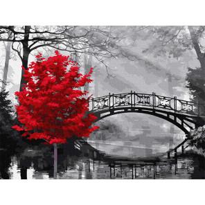Красное дерево в парке Раскраска картина по номерам с цветной схемой на холсте Molly KK0673