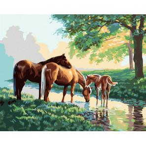 Скакуны на водопое Раскраска картина по номерам на холсте 633-AB