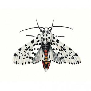 Бабочка леопард 80х100 Раскраска картина по номерам на холсте