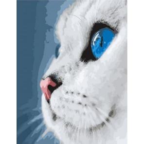 Белый котик Раскраска картина по номерам на холсте GX39255