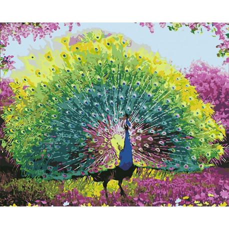 Красота павлина Раскраска картина по номерам на холсте U8071