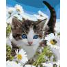 Котёнок в ромашках Раскраска картина по номерам на холсте U8067