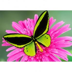 Бабочка Алмазная вышивка (мозаика) Гранни