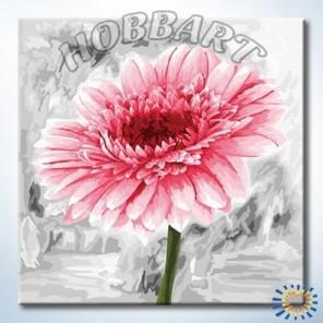 Нежное соло Раскраска по номерам акриловыми красками на холсте Hobbart