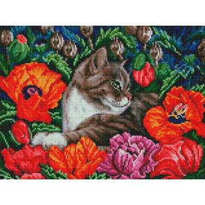 Кот в маках Алмазная вышивка мозаика на подрамнике Белоснежка 609-ST-S