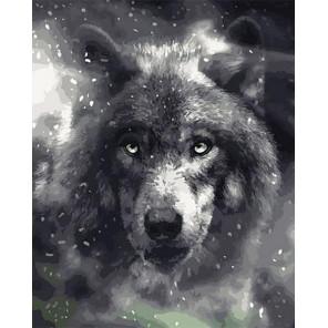 Благородный волк Раскраска картина по номерам на холсте GX40297