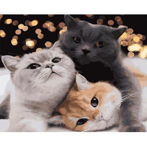 Кошачье братство Раскраска картина по номерам на холсте GX40152