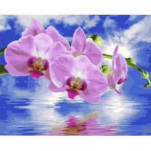 Розовые орхидеи Раскраска картина по номерам на холсте GX40035
