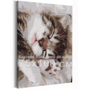 Спящий котёнок 75х100 см Раскраска картина по номерам на холсте AAAA-RS236-75x100