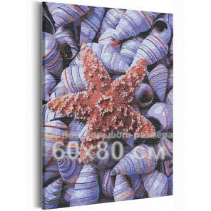 Пример в интерьере Ракушки / Море / Морская тема 60х80 см Раскраска картина по номерам на холсте AAAA-RS231-60x80