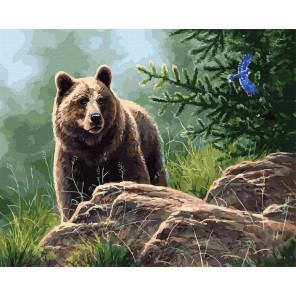Сибирский бурый медведь Картина по номерам Molly KK0714
