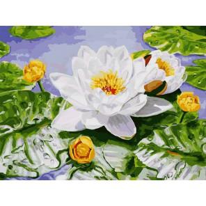 Нимфея озерная Раскраска ( картина ) по номерам акриловыми красками на холсте Белоснежка