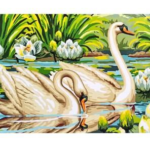Пара лебедей Раскраска картина по номерам акриловыми красками на холсте Molly
