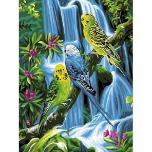 Волнистые попугайчики Раскраска картина по номерам акриловыми красками на холсте Molly