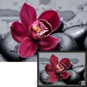 Королевская орхидея Алмазная мозаика вышивка Гранни   Купить алмазную мозаику