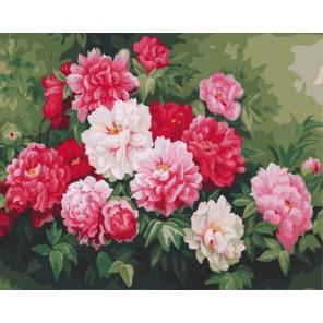 Пионы в саду Раскраска картина по номерам акриловыми красками на холсте | Картина по номерам купить