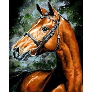 Конь Раскраска картина по номерам акриловыми красками на холсте | Картина по номерам купить