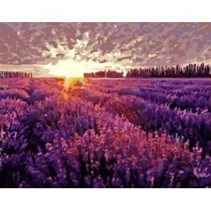Рассвет над лавандовым полем Раскраска картина по номерам акриловыми красками на холсте