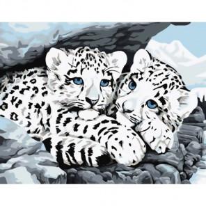 Снежные барсы Раскраска картина по номерам на холсте Molly